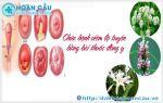 Chữa viêm lộ tuyến tử cung bằng đông y
