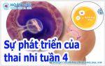 Thai 4 tuần tuổi có kích thước bao nhiêu?