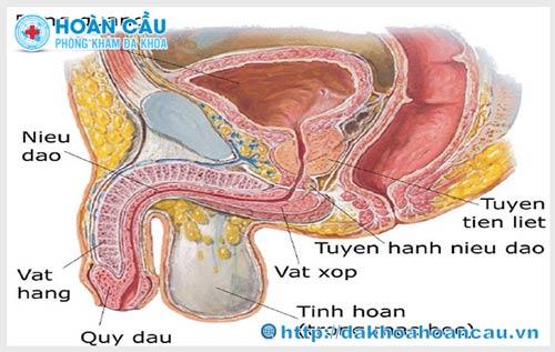 Tìm hiểu về bệnh u tinh hoàn